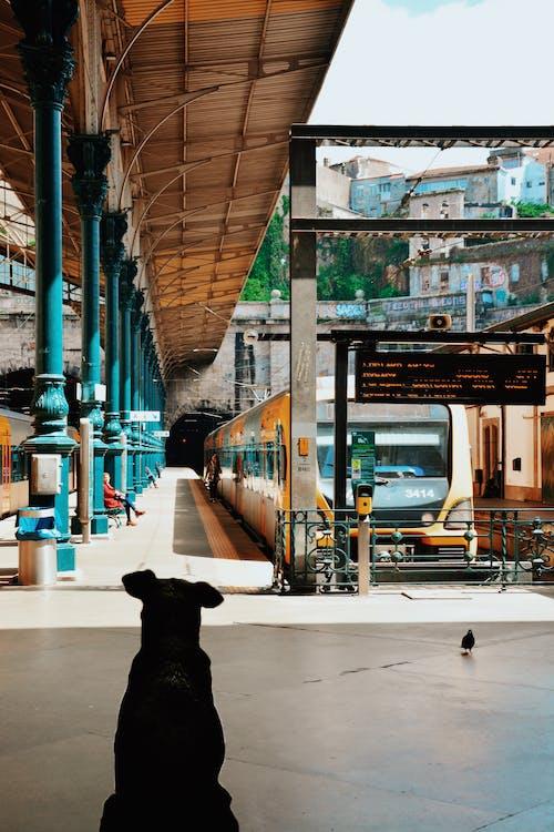 Kostenloses Stock Foto zu architektur, bahnhof, bahnsteig, draußen