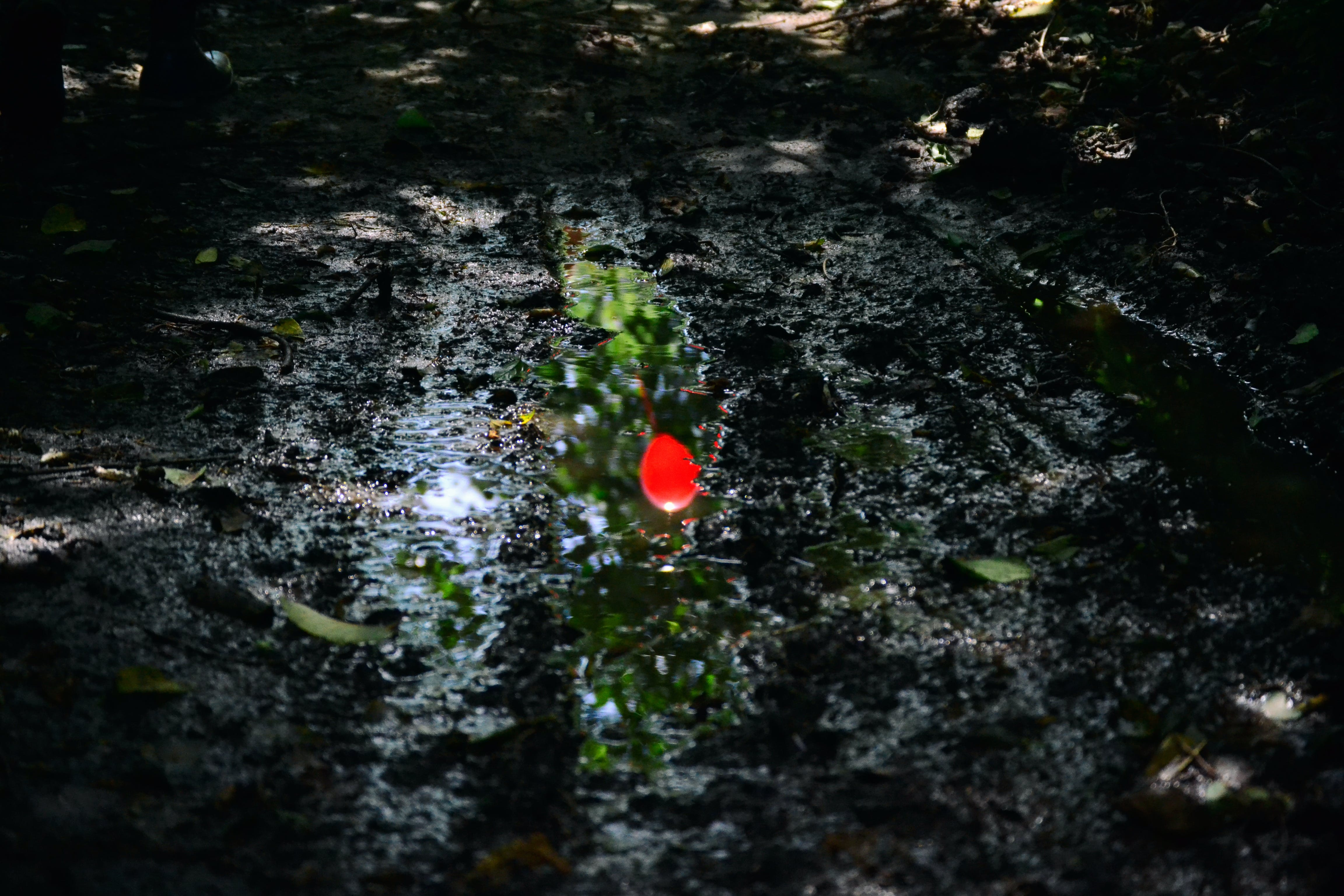 Red Light on Body of Water