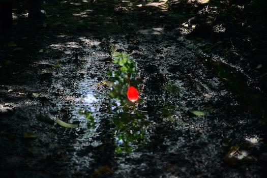 Free stock photo of light, stream, leaves, rain