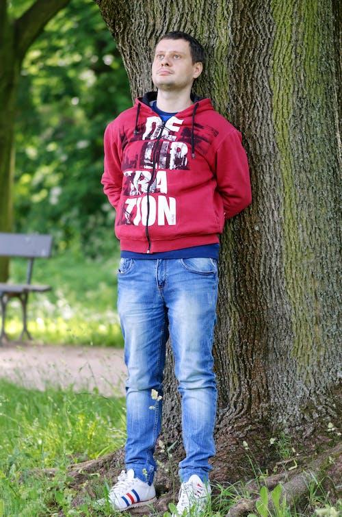 공원, 기댄, 나무 줄기, 나뭇잎의 무료 스톡 사진