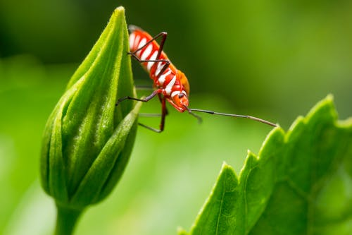 Rood Insect Op Blad
