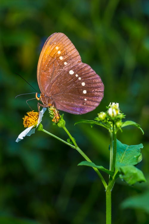 Brown Butterfly Perched On Flower