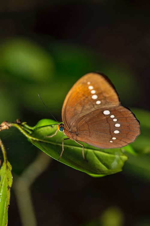 Brown Butterfly on Green Leaf
