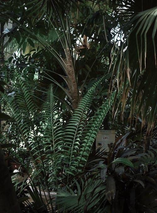 Foto profissional grátis de árvore, fronde, jardim, plantas