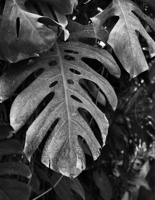 Základová fotografie zdarma na téma černobílá, černobílý, list, rostlina