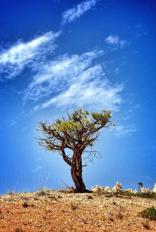 Tree on Hill Under Blue Sky and White Clouds