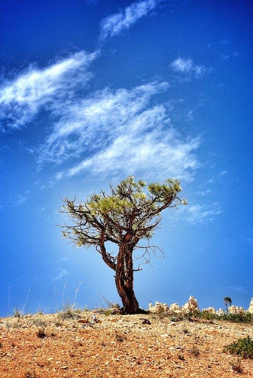 ağaç, ahşap, berraklık