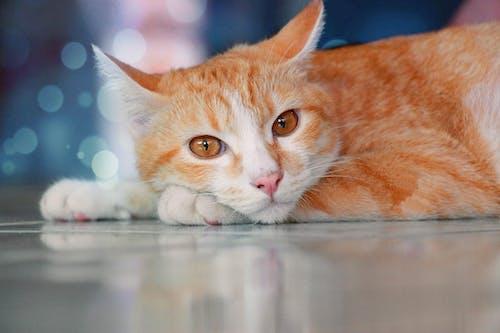 Fotobanka sbezplatnými fotkami na tému mačka, zviera