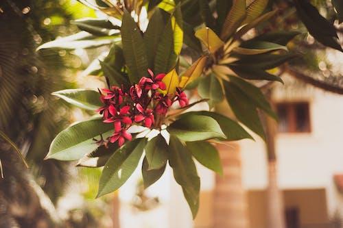 Foto d'estoc gratuïta de arbre, flor, flor bonica, florir