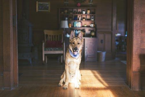 Imagine de stoc gratuită din animal, animal de casă, animal domestic, arhitectură
