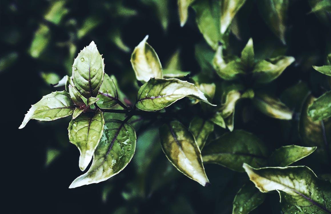 fotografie de aproape, frunze, frunziș