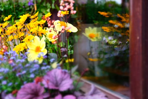 Free stock photo of city, colorful, flowers, mirror