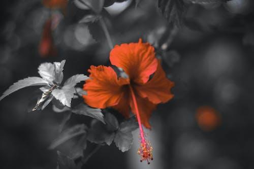 Бесплатное стоковое фото с красный, крупный план, один цвет, размытый