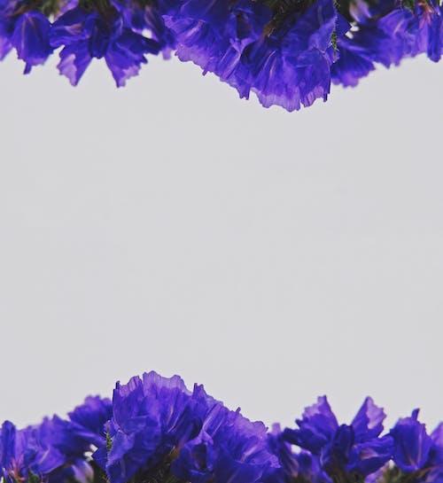 Fotobanka sbezplatnými fotkami na tému detaily, dizajn, farby, kvety