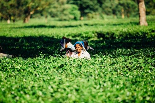 Kostnadsfri bild av åkermark, arbetssätt, asiatisk kvinna, asiatiska människor