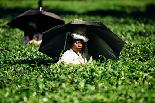 Photo of a Woman Holding an Umbrella