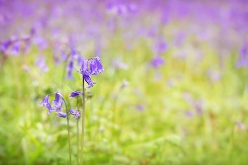 Ảnh lưu trữ miễn phí về hệ thực vật, hoang dã, màu tím, mềm mại