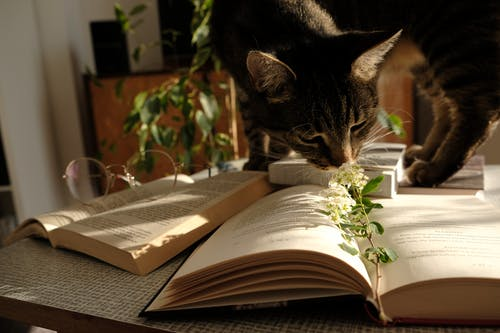 Photo of Cat Standing on Top of a Book