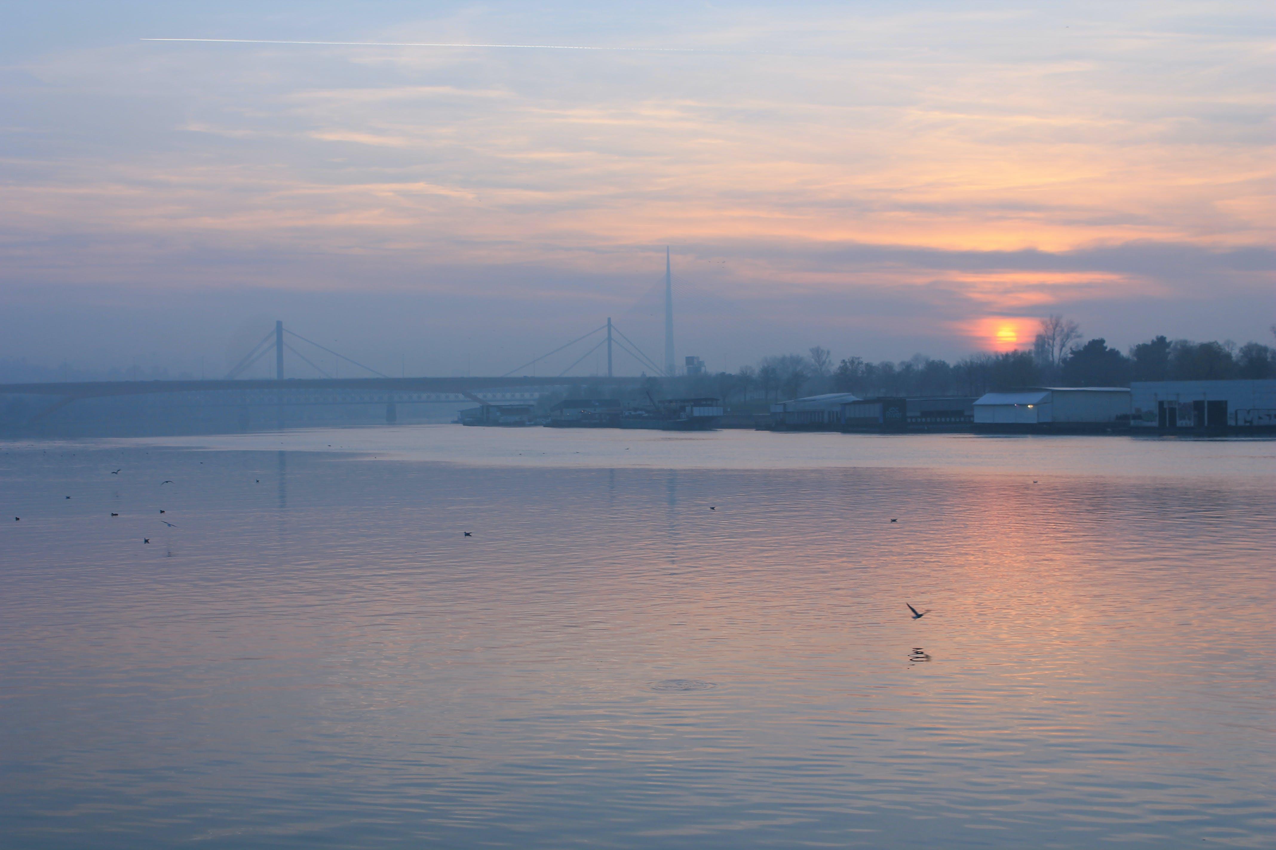 Free stock photo of Belgrade, bird, city, landscape