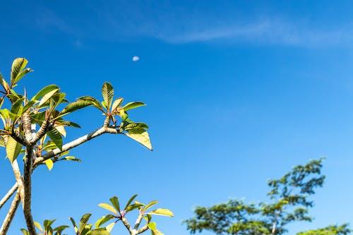 Foto profissional grátis de árvore, céu, filial, folhas