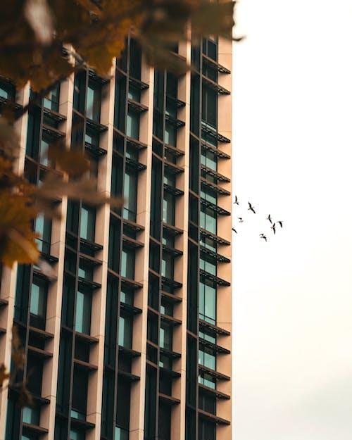 Immagine gratuita di alto, architettura, architettura moderna, articoli di vetro