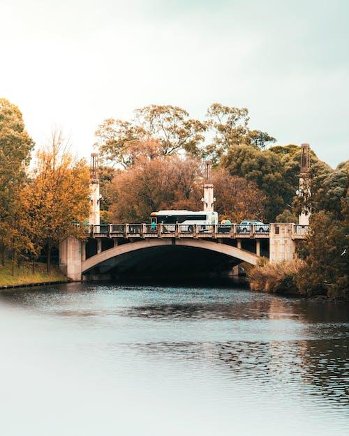 Immagine gratuita di acqua, alberi, ambiente, auto