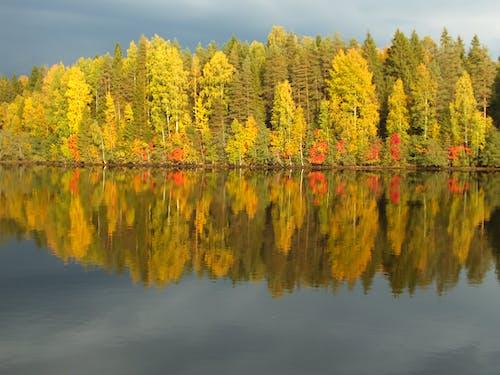 Gratis stockfoto met bladeren, blauw, blauwe lucht, bomen