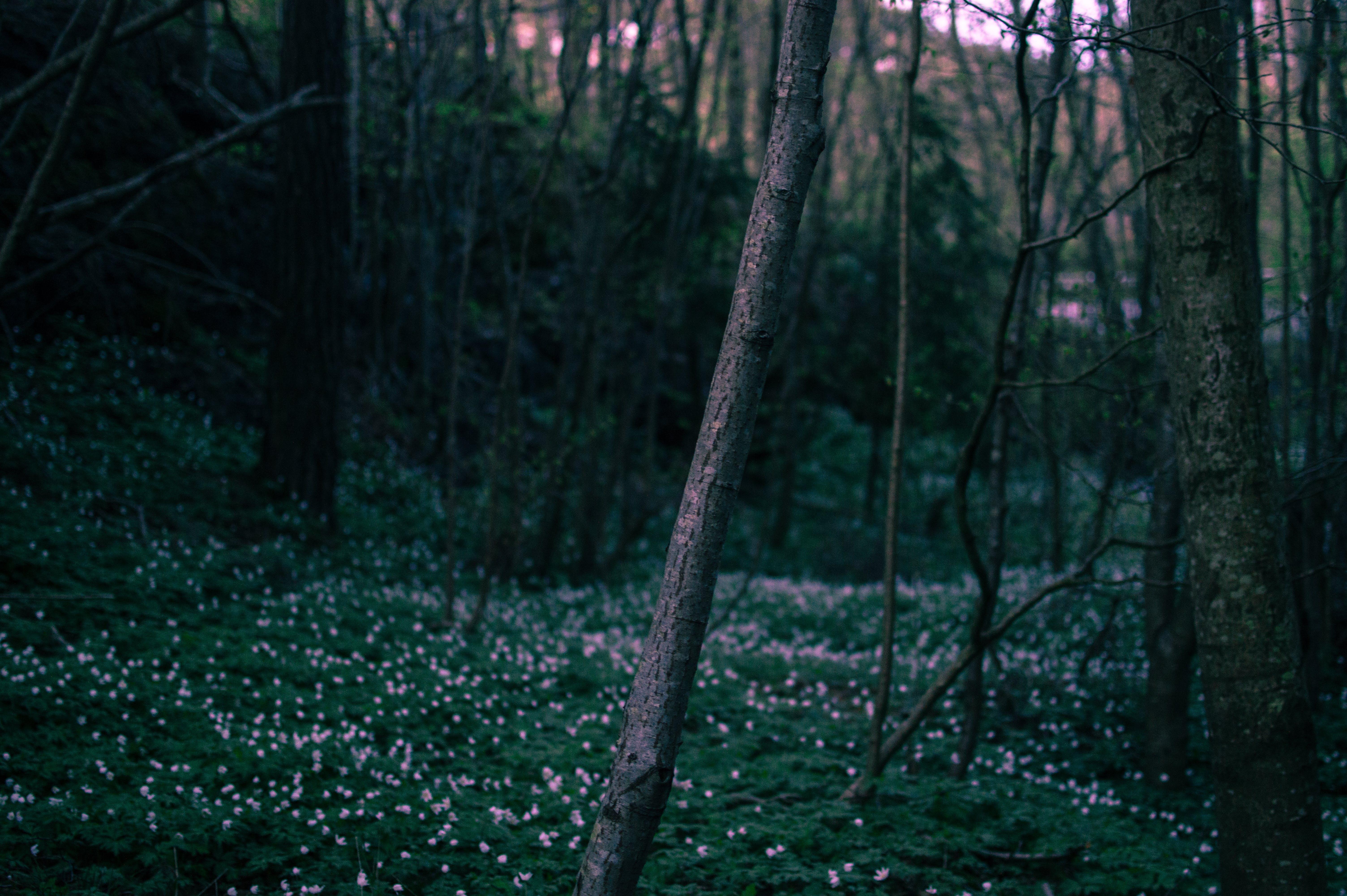dawn, dusk, flowers