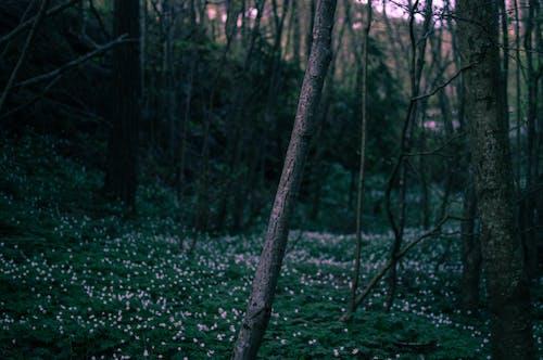 Forest Taken