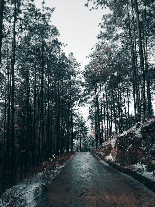 Fotos de stock gratuitas de arboles, árboles altos, carretera, húmedo