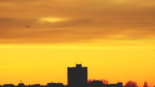のどか, バックライト付き, 夜明け, 建物の無料の写真素材