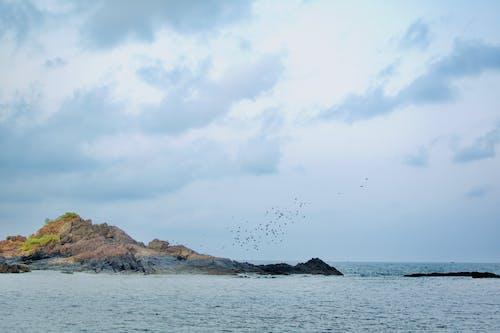 Foto d'estoc gratuïta de aigua, fons de pantalla, oceà, ocells