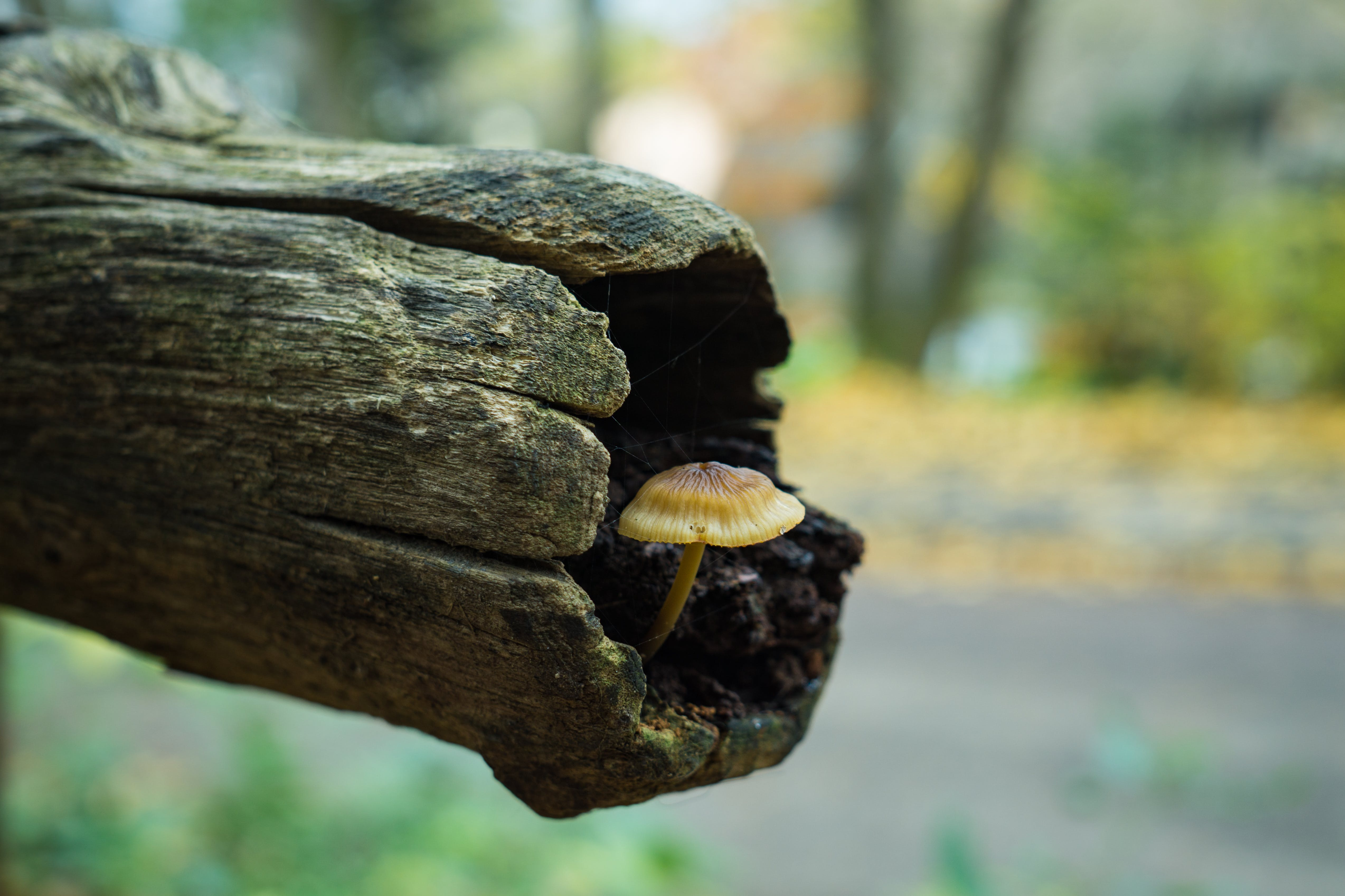 Mushroom in Tree Trunk