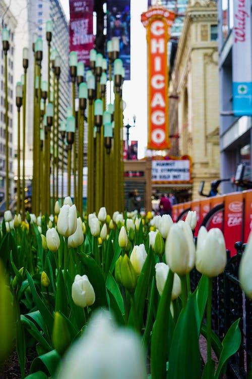 Photos gratuites de chicago, citadin, été, nature