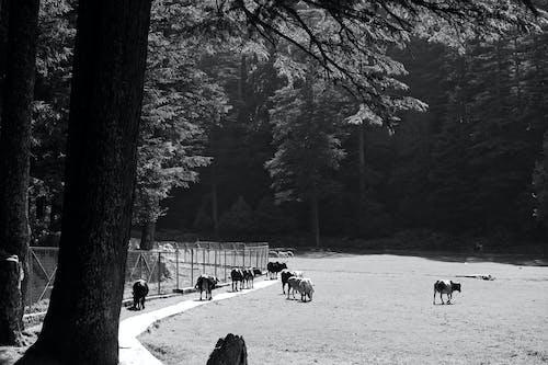 フィールド, フェンス, 動物, 屋外の無料の写真素材