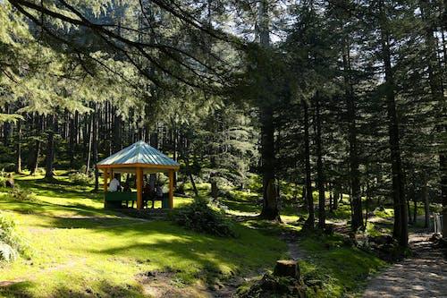 Photos gratuites de arbres, belvédère, bois, campagne