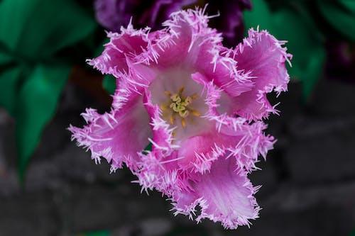Gratis lagerfoto af afstand, billede, blomst, Canon