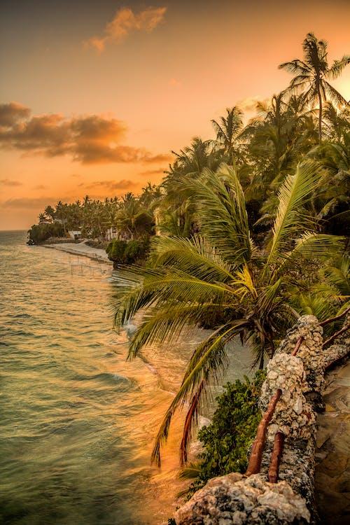 Photos gratuites de bord de mer, ciel, cocotiers, complexe