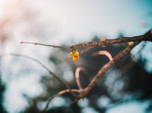 슬픈, 아름다운 꽃, 혼자의 무료 스톡 사진