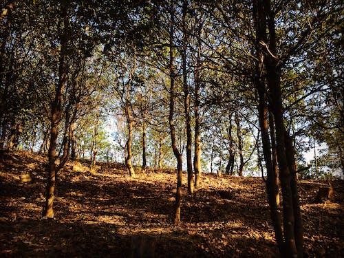 Imagine de stoc gratuită din arbore, China, codru, deal
