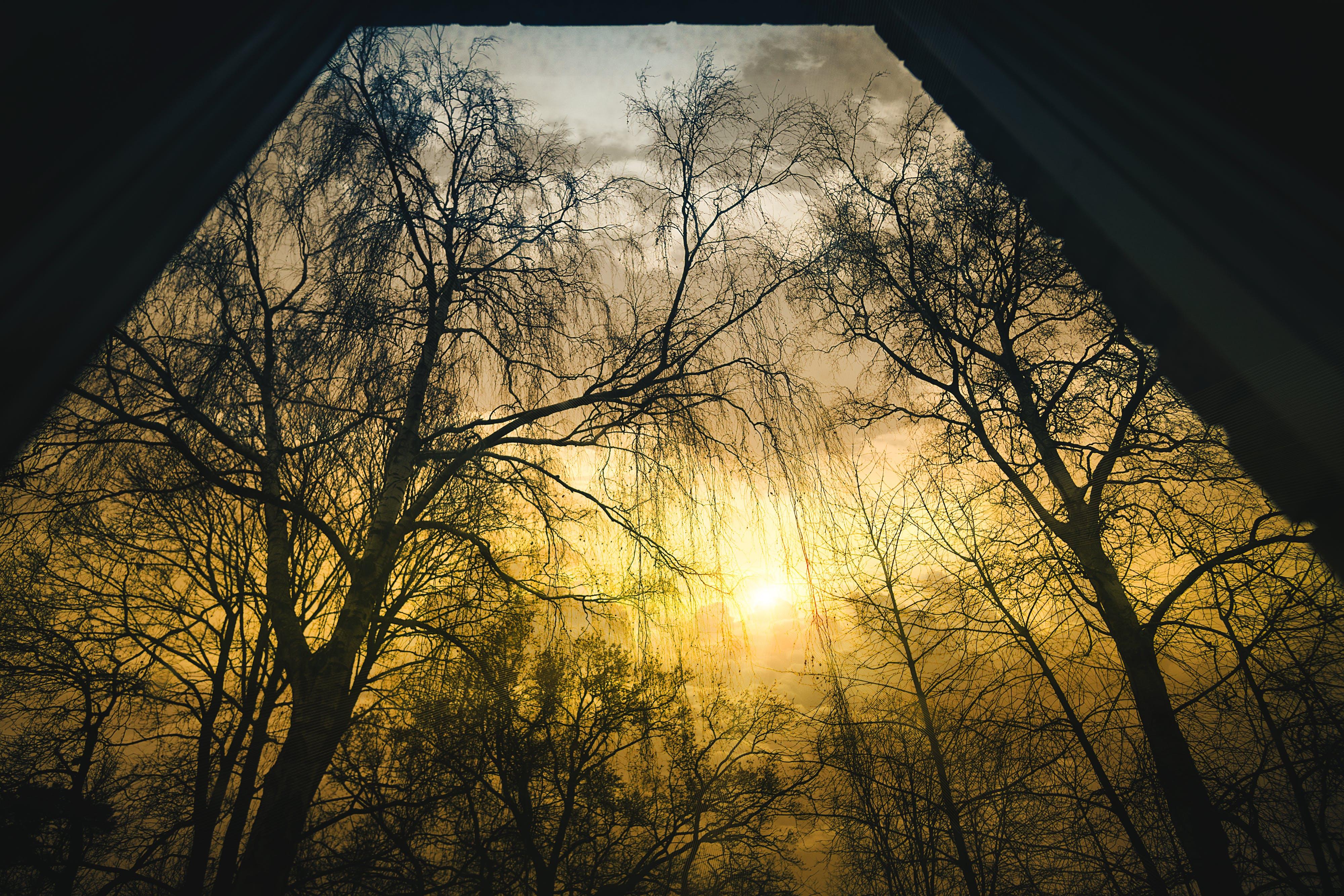 Bare Trees during Sunrise