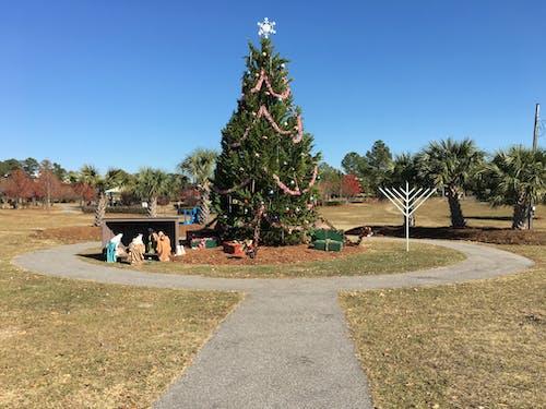 Free stock photo of christmas, christmas tree, manger, tree
