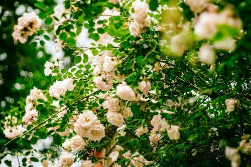 açık hava, bitki örtüsü, bitkiler, bulanıklık içeren Ücretsiz stok fotoğraf