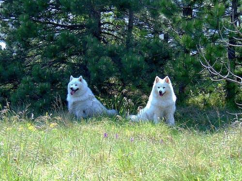 Gratis arkivbilde med hunder, natur, naturpark, skog