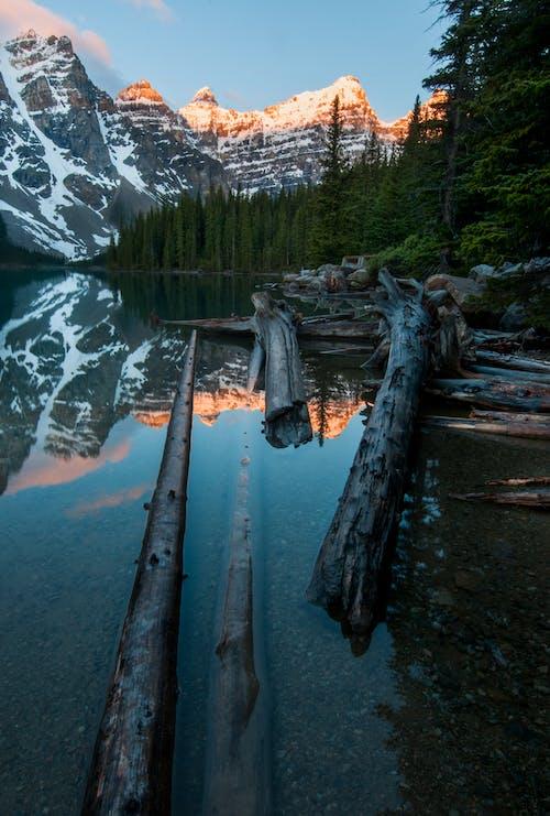 Imagine de stoc gratuită din apă, arbori, arbori veșnic verzi, bușteni