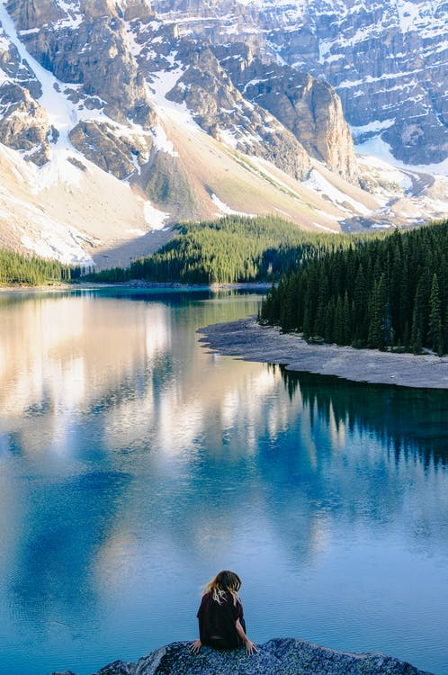 Alberta, életmód, fa