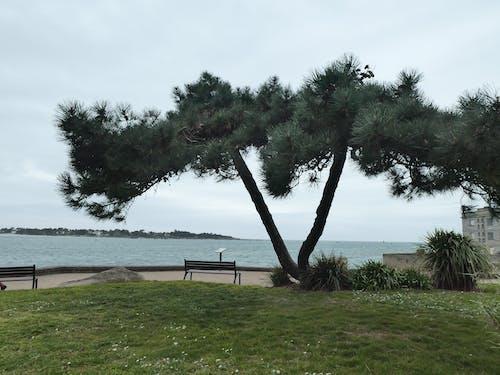 Free stock photo of arbre, calme, eau