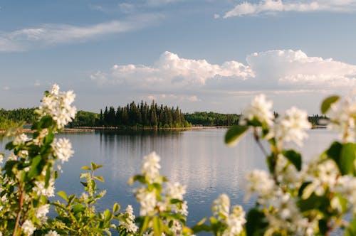 Fotos de stock gratuitas de agua, al aire libre, Alberta, arboles
