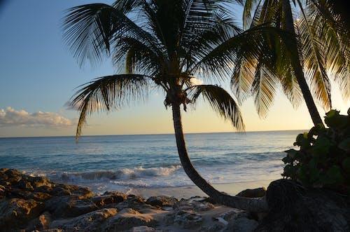 Gratis lagerfoto af afslapning, bugt, bølger, eksotisk