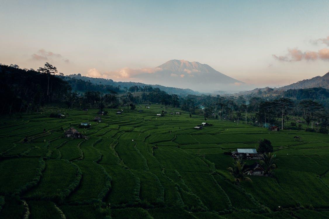 agricultura, al aire libre, amanecer